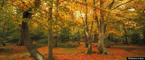 KNIGHTWOOD OAK TRAIL NEW FOREST