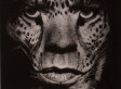 Photographer Albert Watson's Iconic Shots Of Hitchcock, Jagger And Kate Moss On Display (PHOTOS)