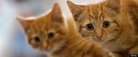 WINDSOR DEAD CATS