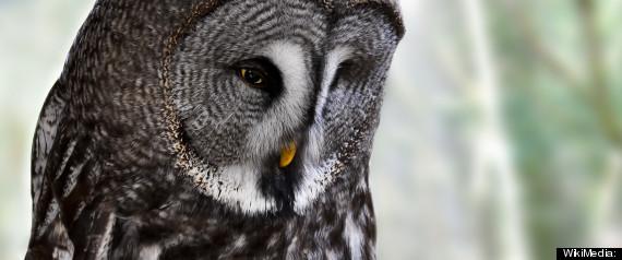 CALGARY ZOO OWL DEAD