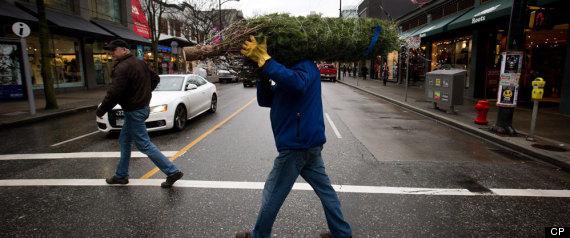 CHRISTMAS TREE GREEN CANADA