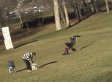 Eagle Grabs Baby?: Video Of Bird Snatching Child In Montreal Baffles Viewers (UPDATES)