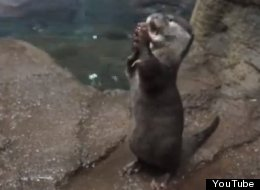 WATCH: Well, This Is The New Cutest Thing We've Ever Seen