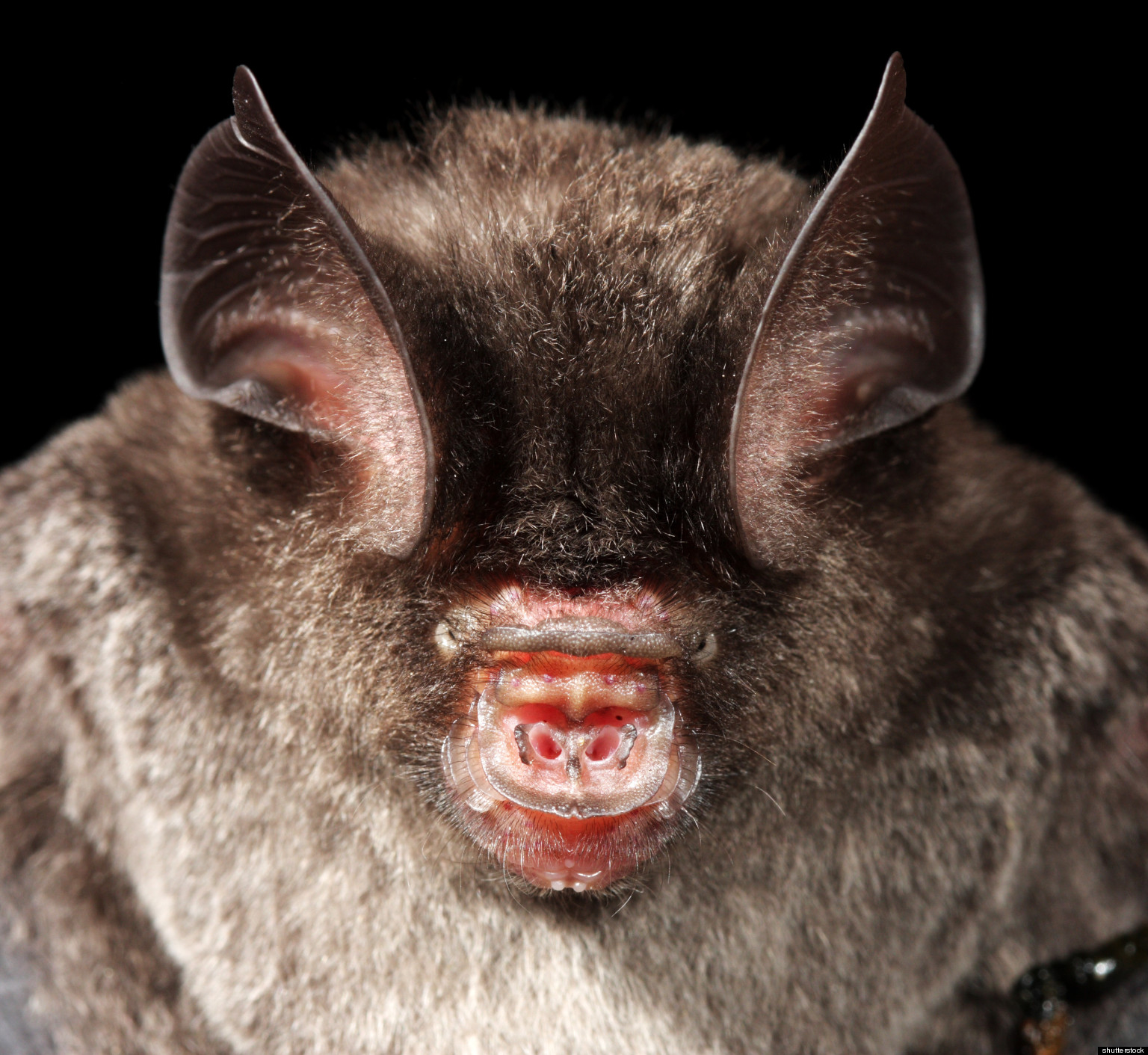 Bat Bus 12 >> Bat Immunity Research May Shed Light On Cancer, Infections ...