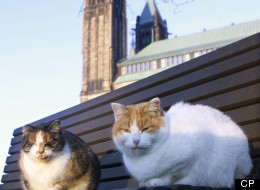 Parliament Hill Cats Ottawa
