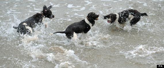 DOGS SEA RESCUE