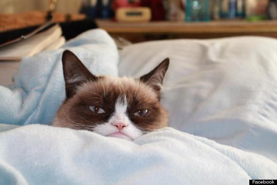 grumpy cat kitten