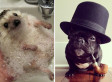 The 15 Most Important Pets Of 2012 (SLIDESHOW)