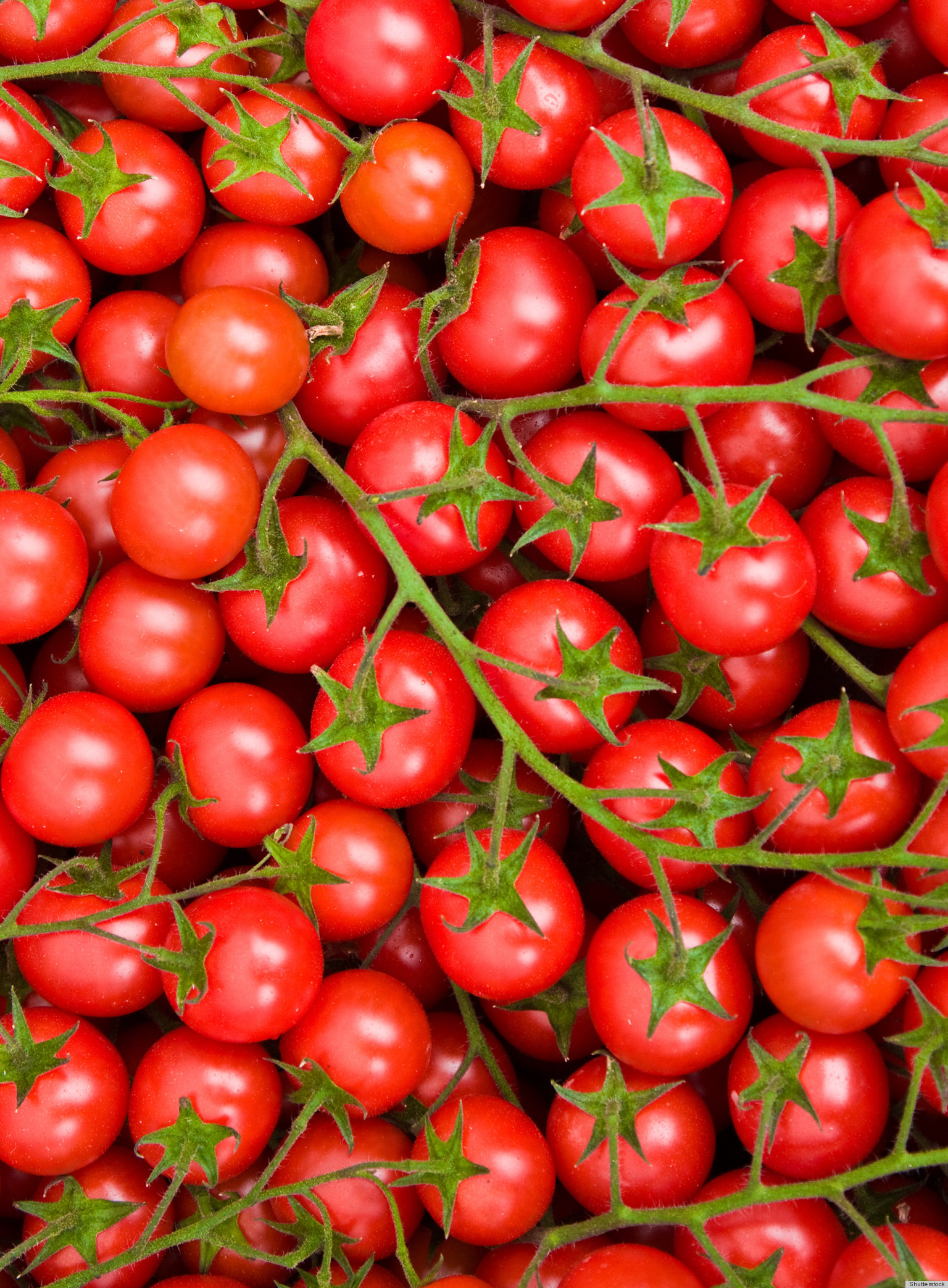 One Plant That Grows Both Tomatoes And Potatoes Trending