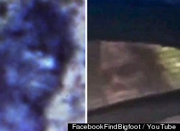 Is This A Face Only A Bigfoot Mother Could Love? (VIDEO)