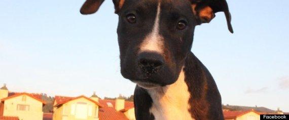 CHARLIE SAN FRANCISCO DOG