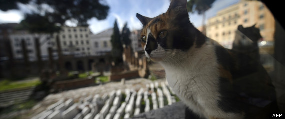 CAT ITALY