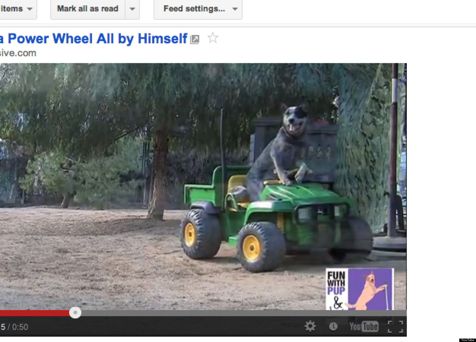 Dog Drives Power Wheels Car All By Himself (VIDEO)