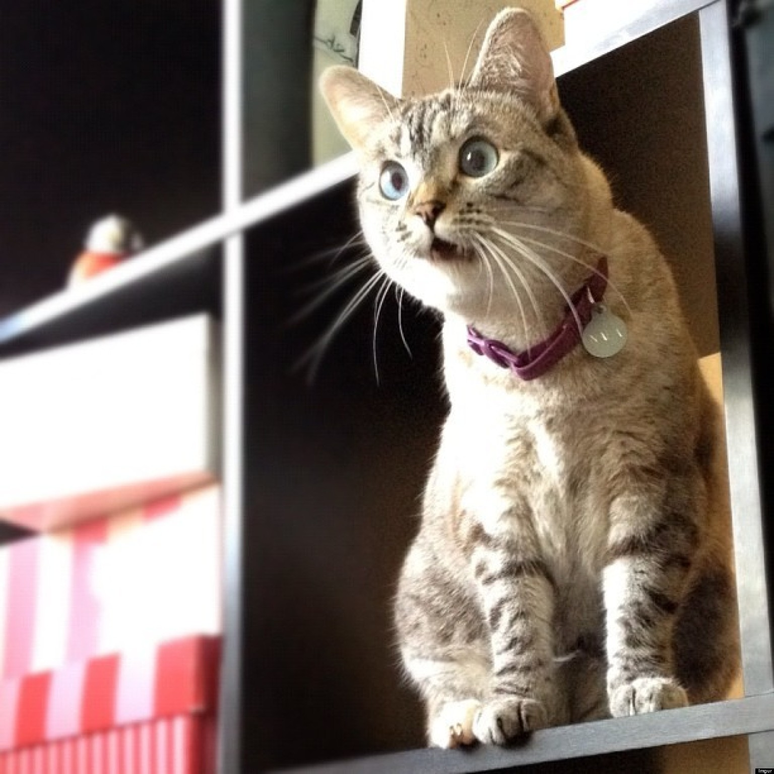 27 Surprised Cats Who Can't Believe What They Just Saw ...