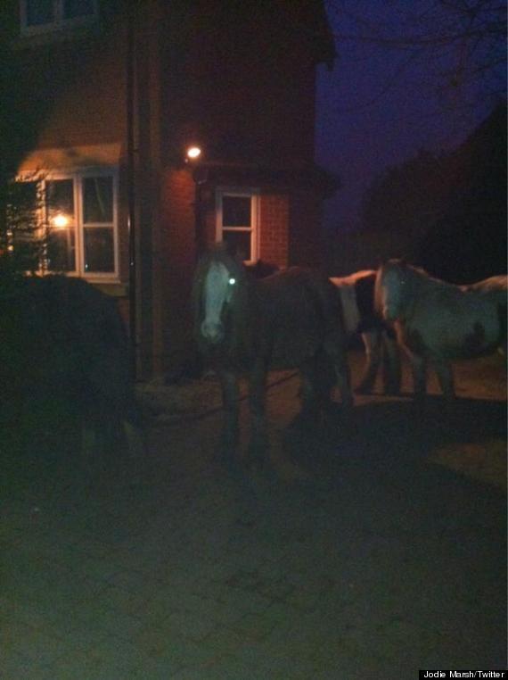 jodie marsh ponies