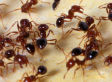 CIA Supervisor Claimed He Used Fire Ants On Detainee