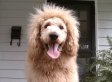 Charles The Monarch, Dog, Mistaken For Lion In 911 Call (PHOTOS)