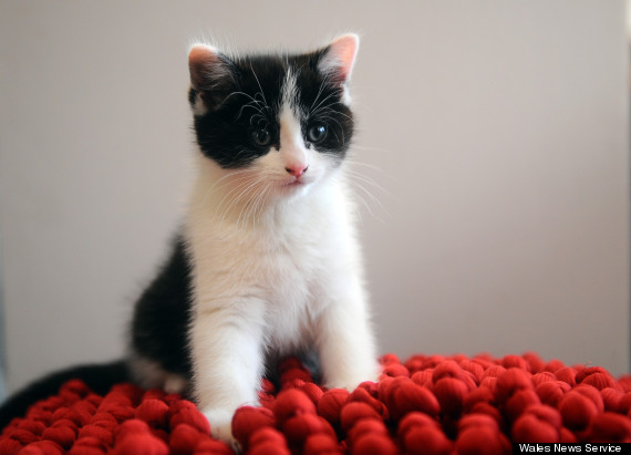 little boy stolen kitten returned to cardiff pet s