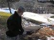 Mouse Eaten By Hawk Immediately After Release (VIDEO)