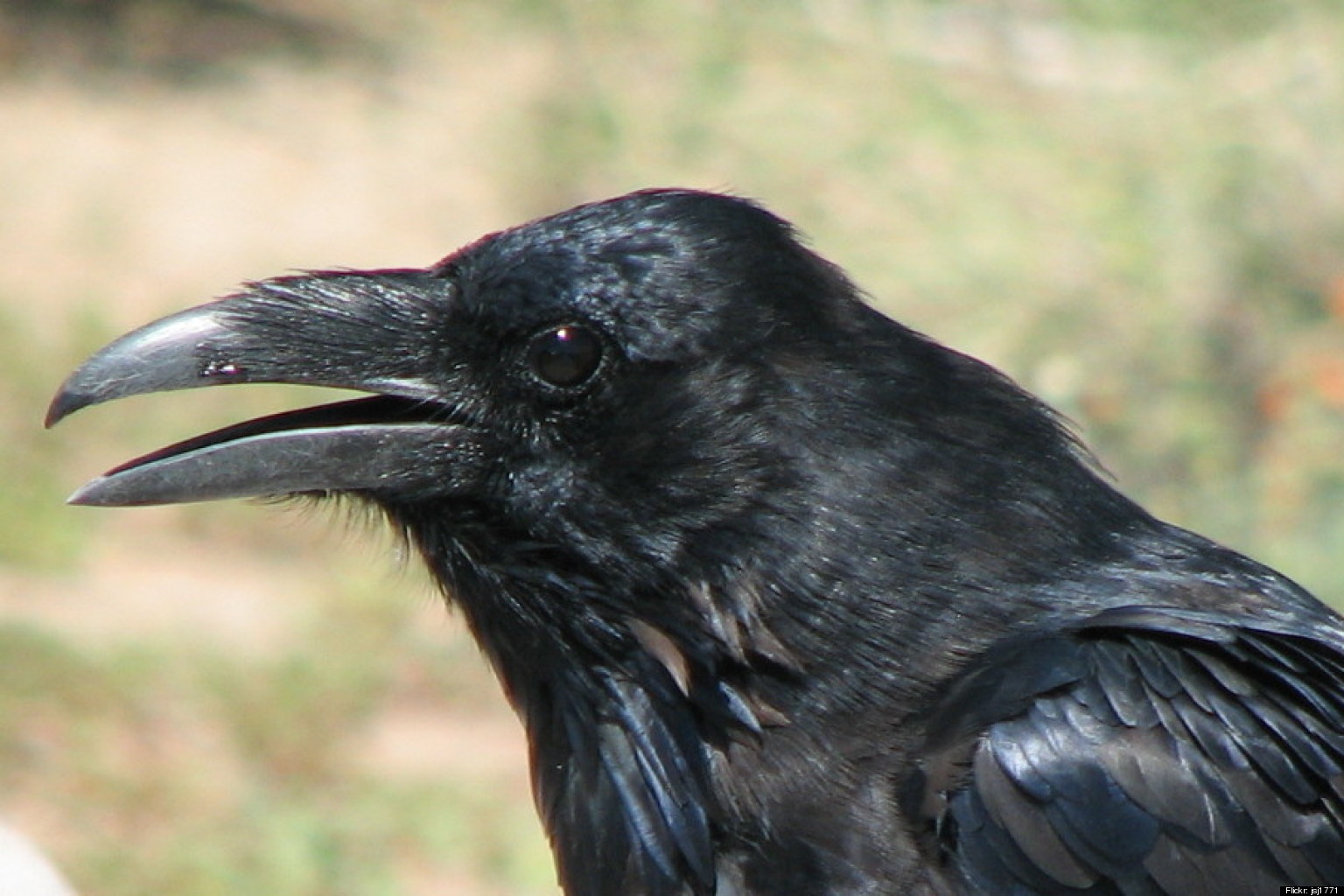 raven landing front view
