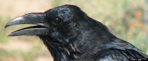 CROW INTELLIGENCE