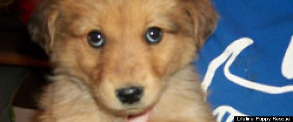 LIFELINE PUPPY RESCUE COLORADO