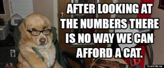 FINANCIAL DOG