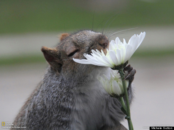 flower and mouse