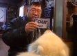 Potato The Math Whiz Dog: Chinese Samoyed Does Math, Memorizes Numbers (VIDEO)