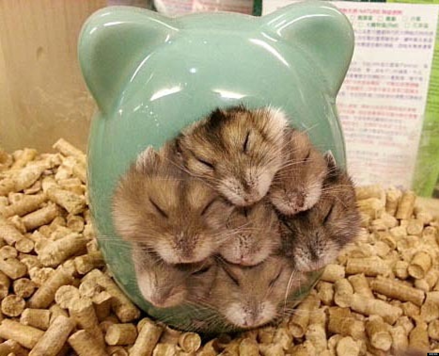 Room For One More Hamsters Show Us How To Snuggle
