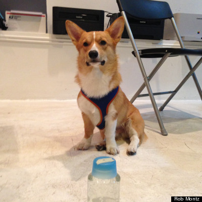 corgi water taste test