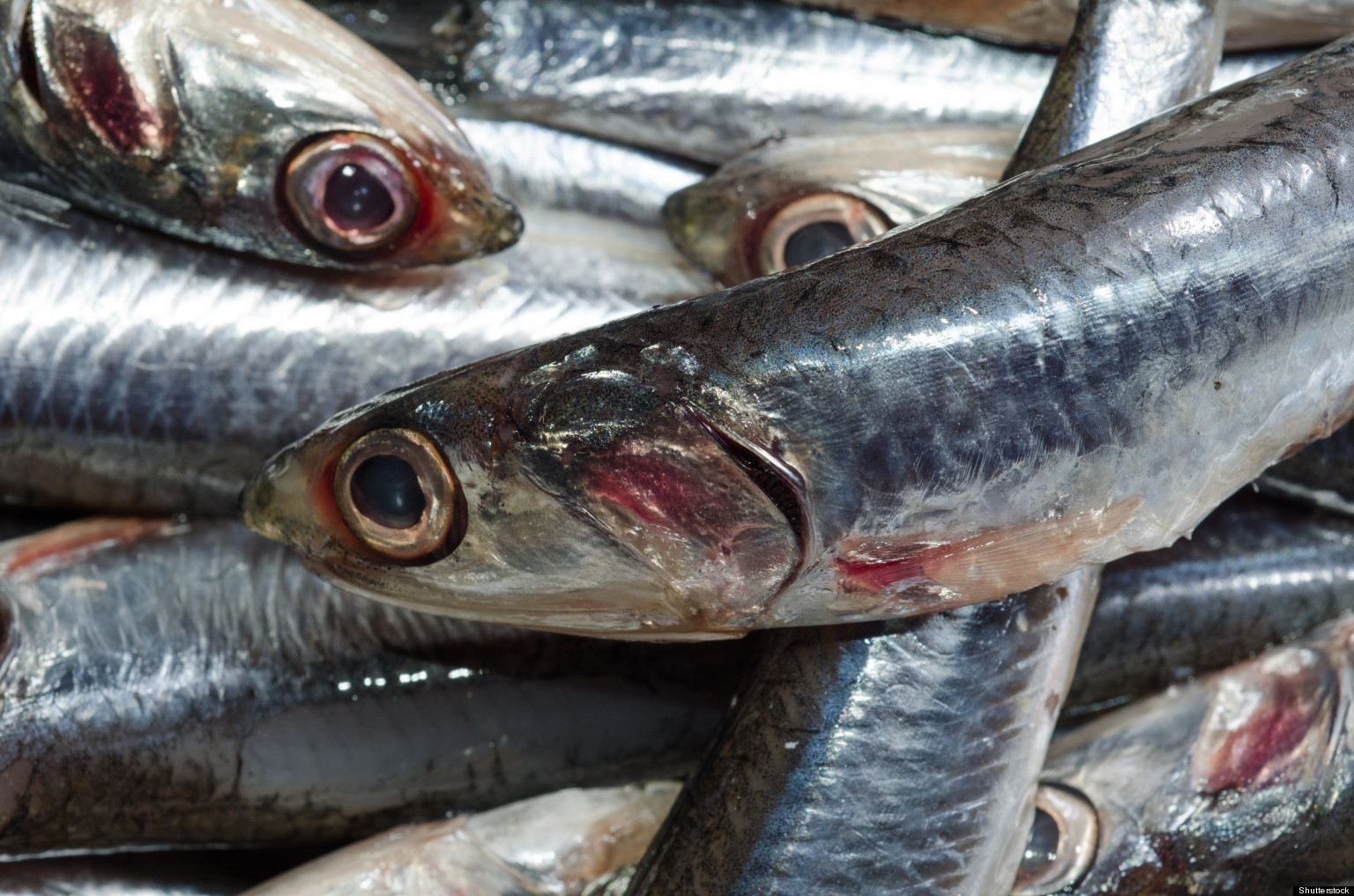 High mercury fish how to eat safe sustainable seafood for Best type of fish to eat