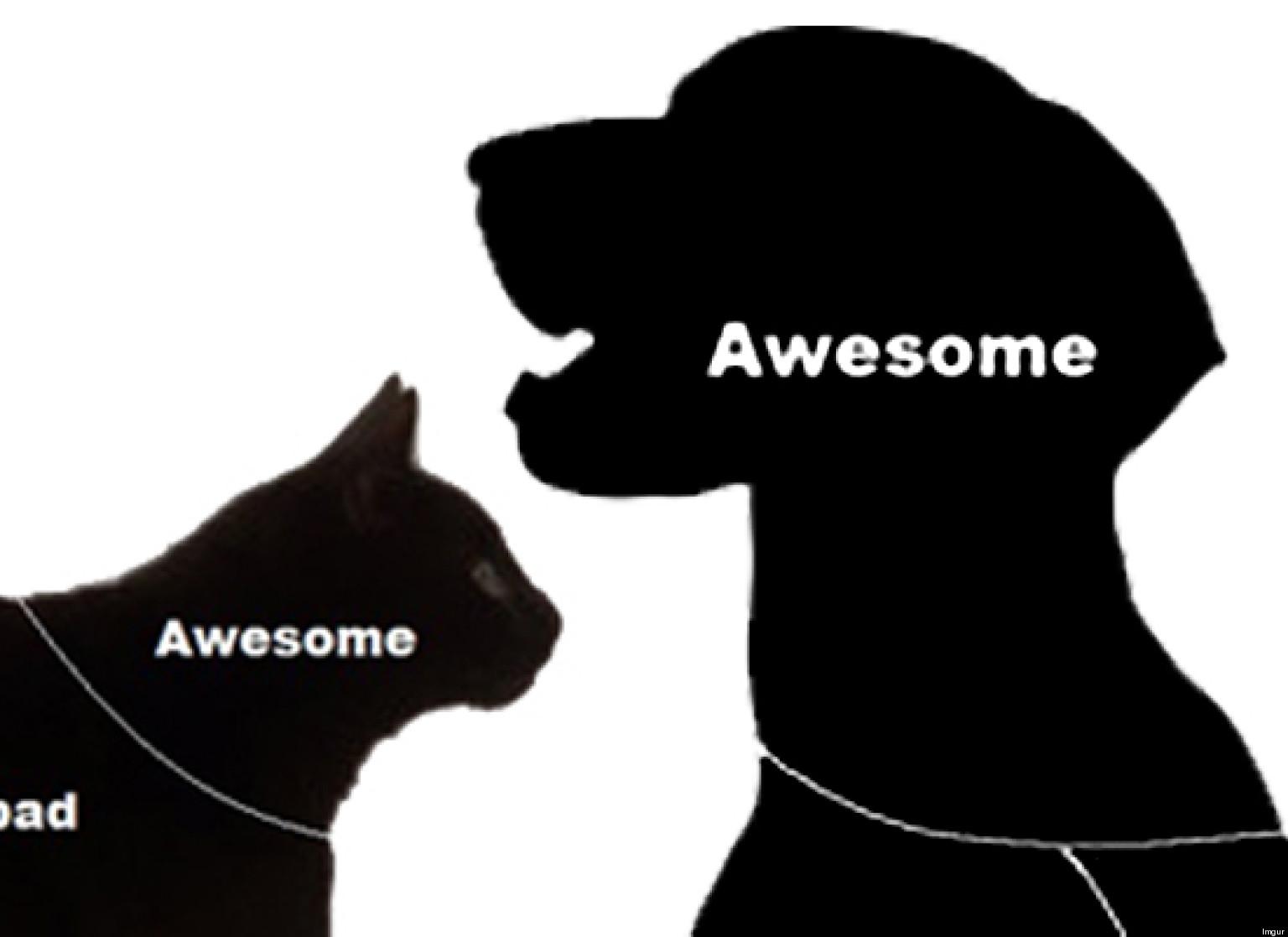 Dog Cat Petting Guide