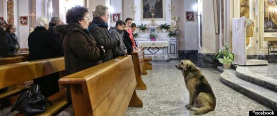 Ciccio Italian Dog