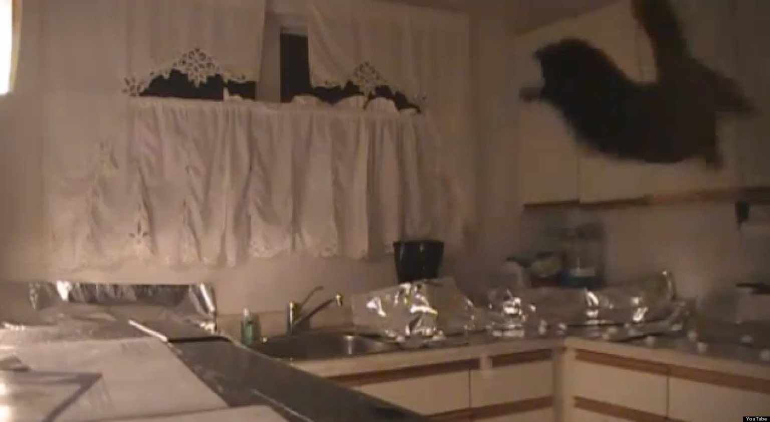 how to keep cats off a kitchen counter video huffpost uk. Black Bedroom Furniture Sets. Home Design Ideas