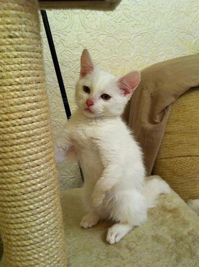 harvey kitten