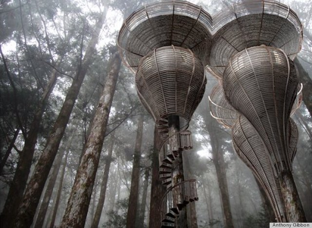 roost treehouses