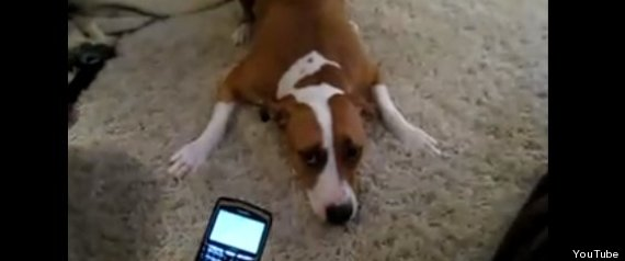 Pets Using Cellphones