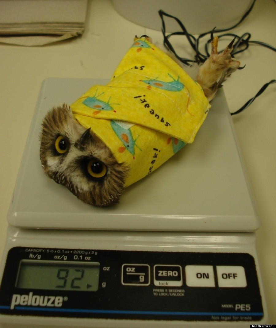 owl wrapper