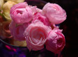 Sprout Home Plant Of The Week: Ranunculus