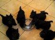 Scottie Puppy Pinwheel Exists, Is Wonderful (VIDEO)