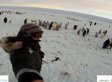 Penguin Colony's First Contact With Humans In Antarctica Captured On Camera (VIDEO)
