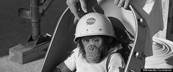 SPACE MONKEY HAM THE CHIMP