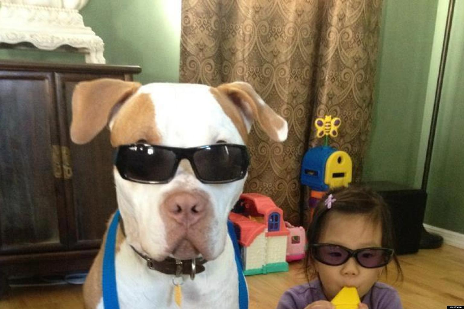 Dog And Baby Form Rock Band Photo Huffpost