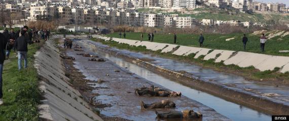 Aleppo Fiume