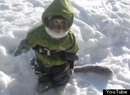 WATCH: Monkey In A Snowsuit Will Make Your Heart Explode