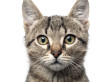 Domestic Cats Kill Billions Of Mice And Birds Per Year, Study Estimates
