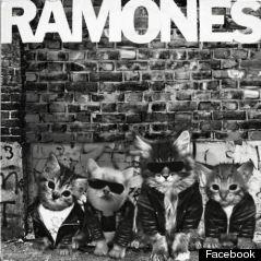 kitten ramones album cover