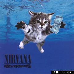 nirvana cover kitten