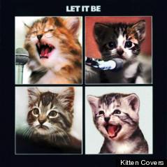 beatles cover kittens